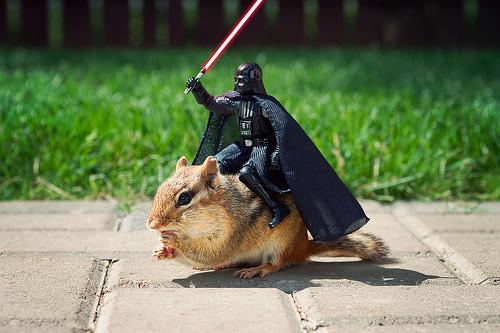 Darth Vader auf einem Eichhörnchen